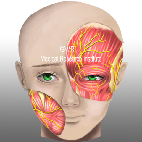 Headache, migraine, and cluster headache medications – A rock and hard place for sufferers.