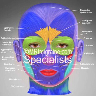 1 front muscles (migraine.com)